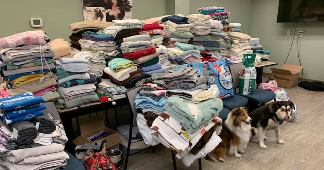Alberta SPCA experiences outpouring of support after public call for help