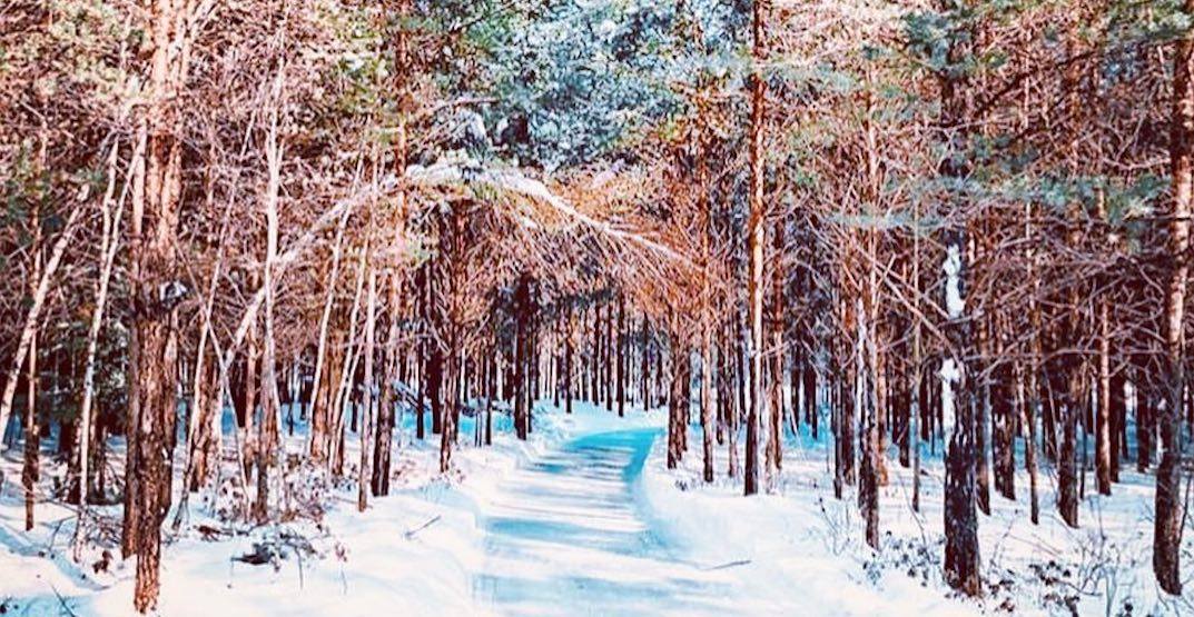 You can skate through this enchanted forest in Quebec all winter