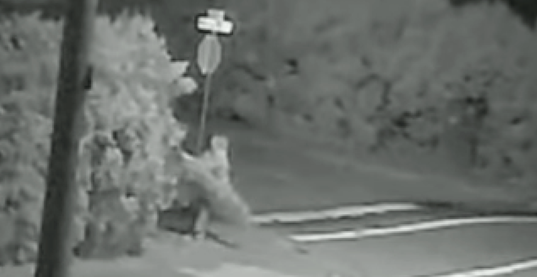 Person caught stealing Christmas-sized tree from stranger's backyard (VIDEO)