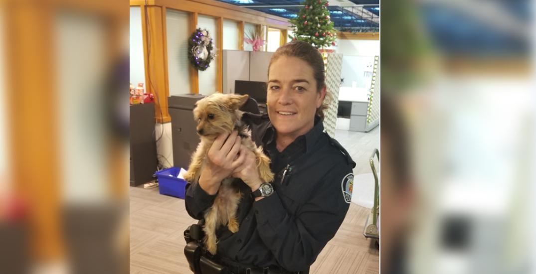 Dog allegedly stolen on TTC returned to owner