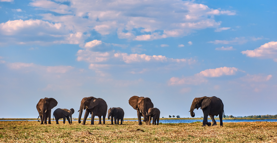 How to ensure the wildlife tourism you're participating in is ethical