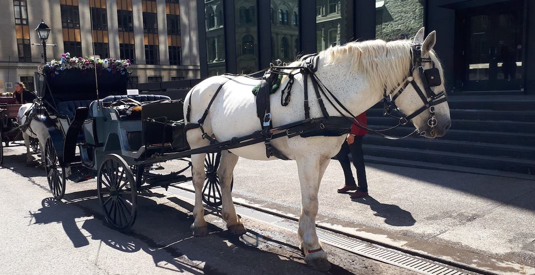 New Year's Eve officially marks the end of horse-drawn carriages in Montreal