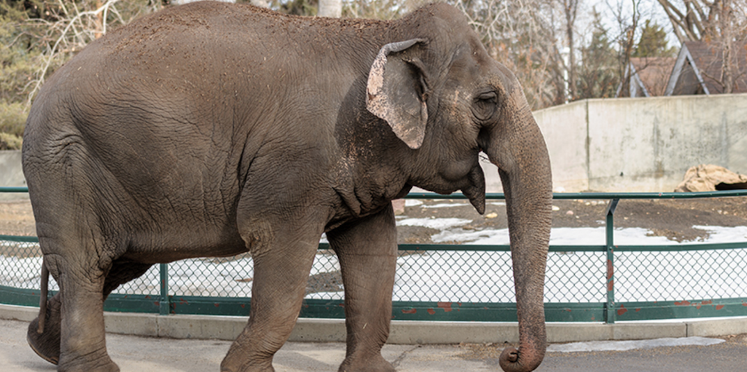 Supreme Court will not hear case of Lucy the Elephant from the Edmonton Zoo