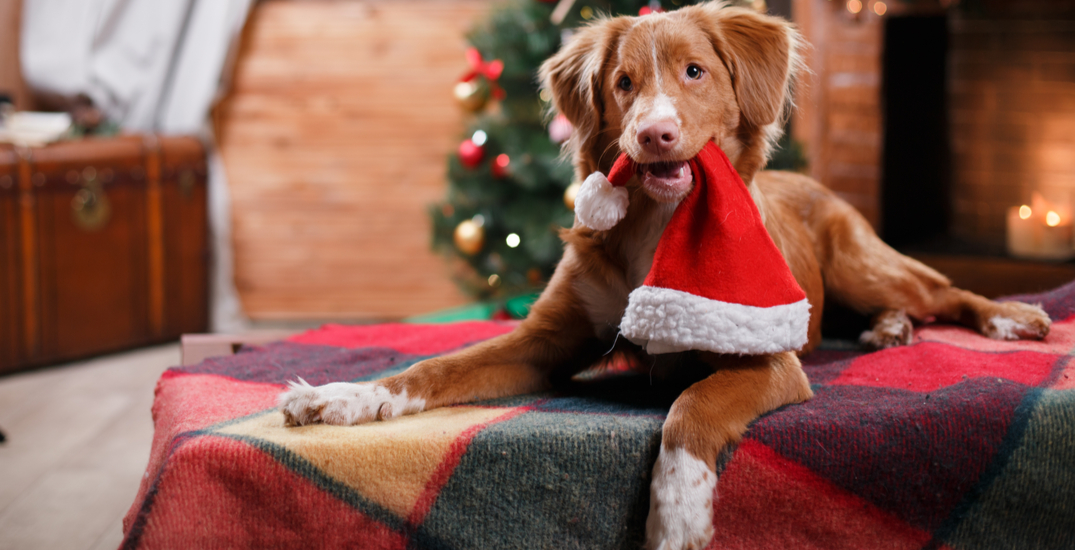 You can purchase a Christmas stocking for shelter animals in Toronto