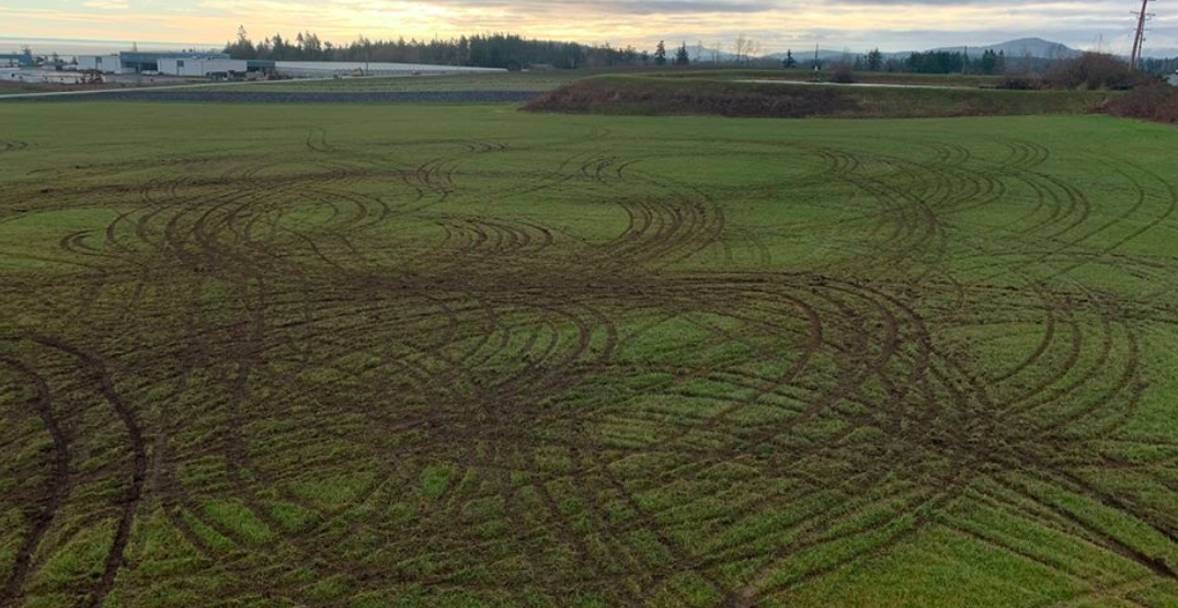 "BC farm says ""thousands of dollars"" lost after vandals destroy field"