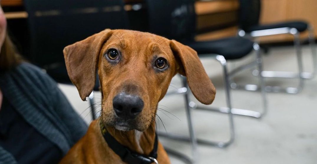 Find your new best friend at Seattle's adoptable dog meet and greet