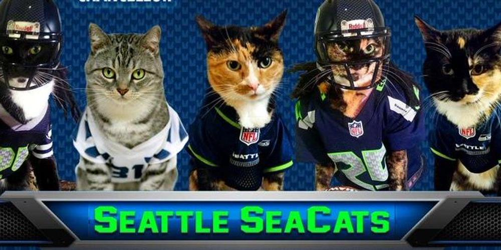 This Seattle Seahawks fan page features adorable cats