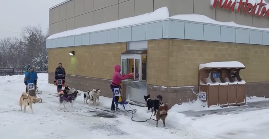 A group of people went dogsledding through a Tim Hortons drive-thru (VIDEO)