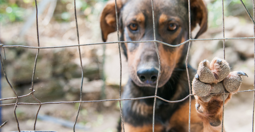 """20 animals """"in distress"""" seized from Langley property: BC SPCA"""