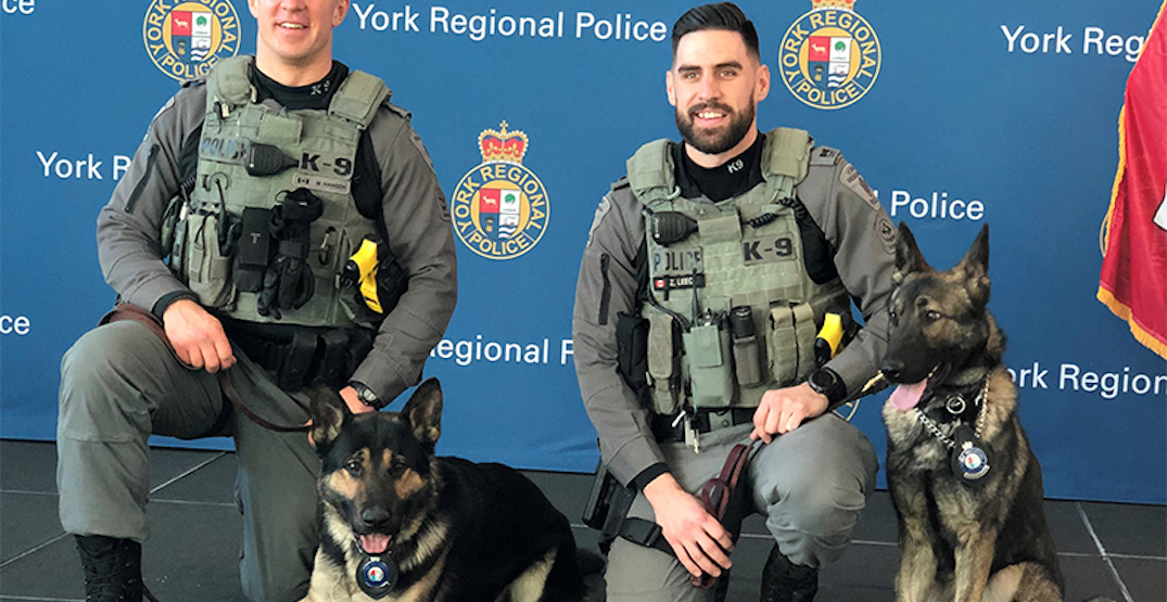These adorable York police dogs just graduated (PHOTOS)