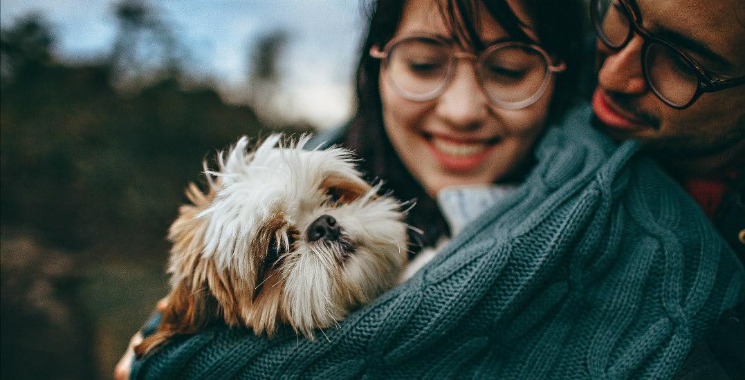 Calgary PetSmart hosting National Adoption Weekend event
