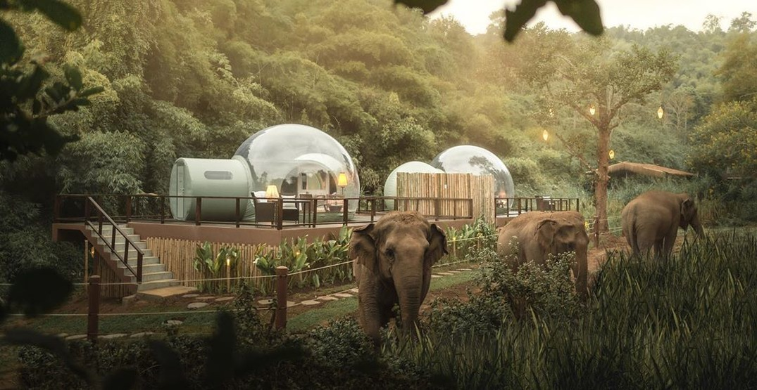 "Watch elephants in their natural habitat from a see-through ""Jungle Bubble"""