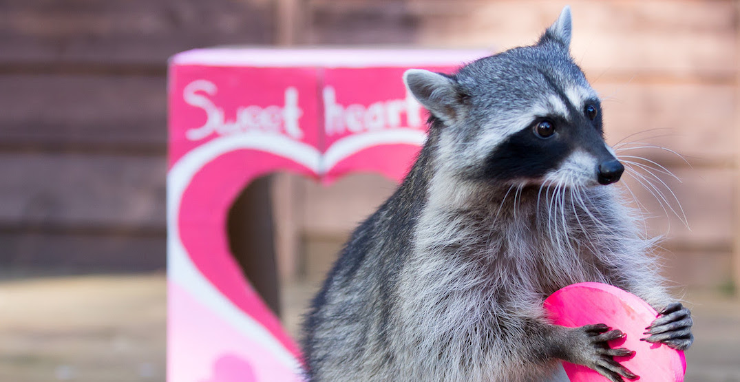 Spend Valentine's Day with adorable animals at the Woodland Park Zoo