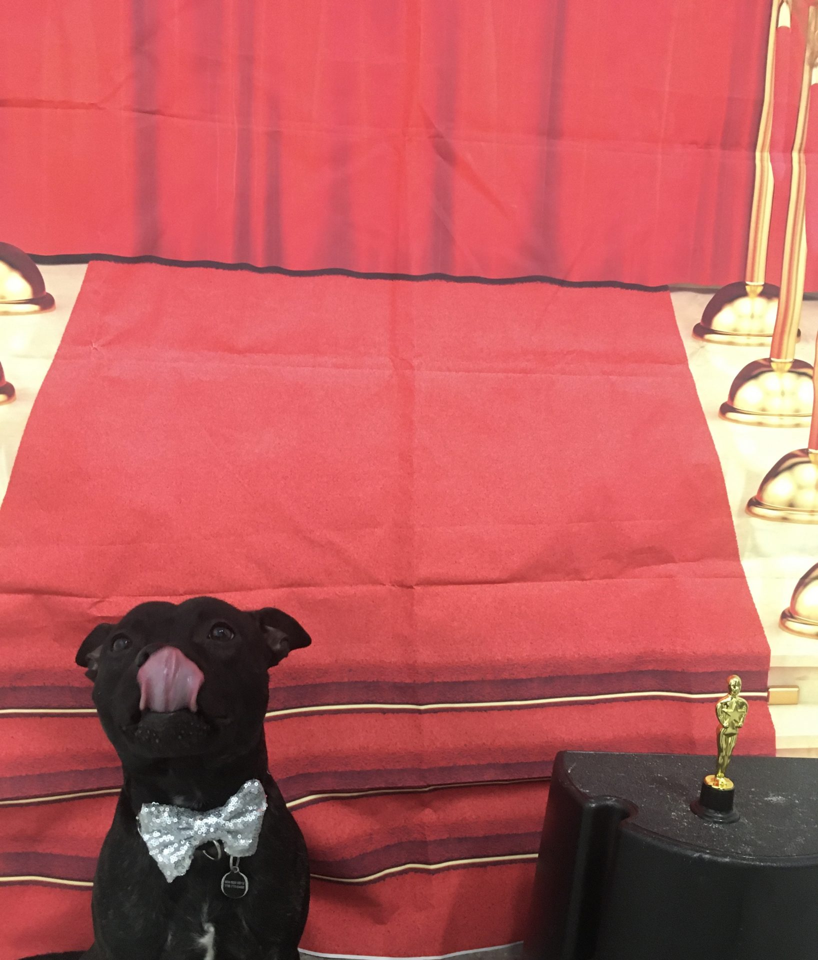 2020 Pawscar Award ceremony / Jet Pet Olympic Village