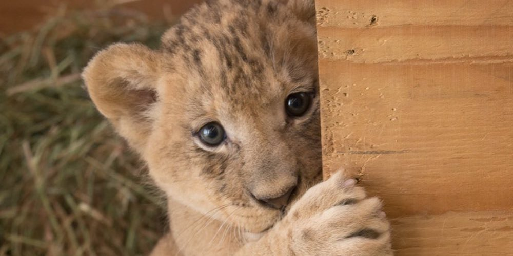 Let your cub spend Valentine's Day at the Oregon Zoo