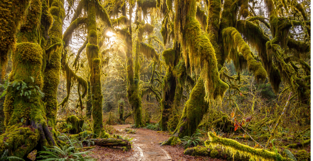 Wonderful Washington: Escape to the lush land that is the Hoh Rain Forest