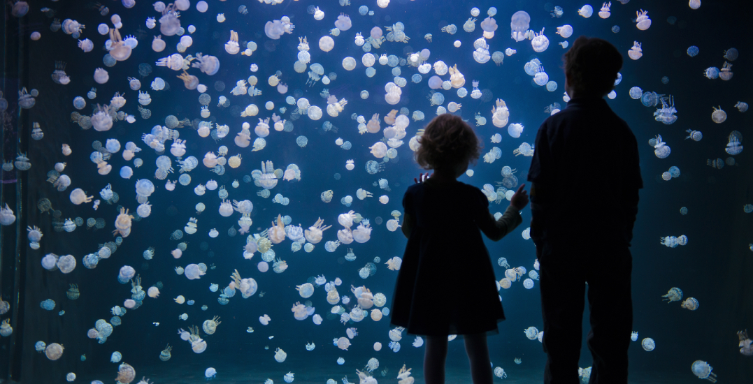 Get FREE kids' admission to the Vancouver Aquarium on Family Day Weekend