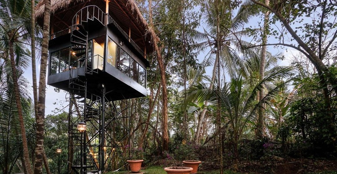 Experience the jungle in these eco-friendly treetop lodges in Bali
