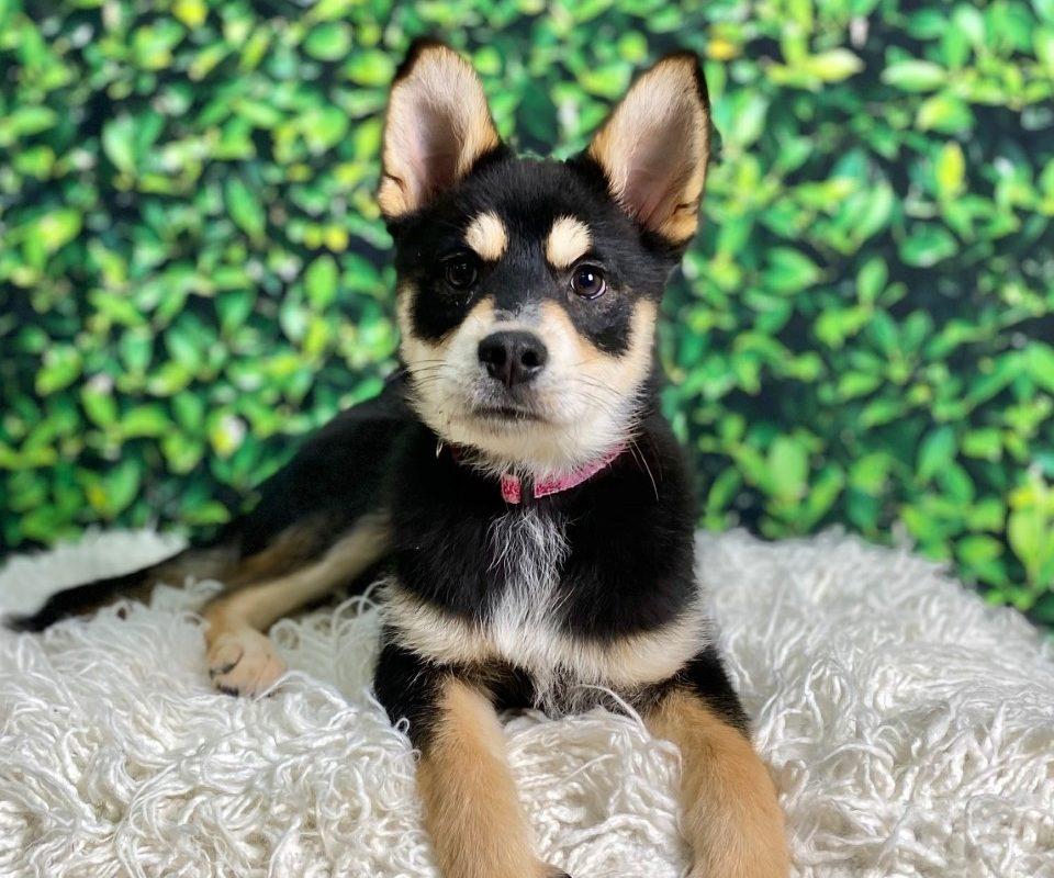 Dog Adopt Portland