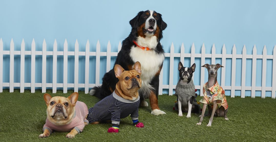 An adorable pet shop is popping up at Nordstrom February 14 to April 5