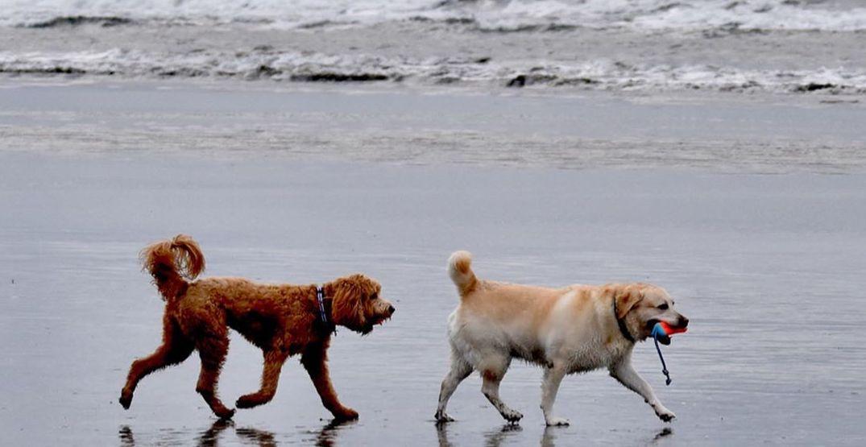 Wonderful Washington: Live your best beach life at Seabrook