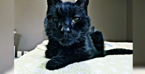 BC cat so malnourished his eyelid folded in on itself: SPCA   News
