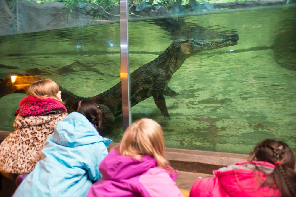 Oregon Zoo spring break camps now open for registration