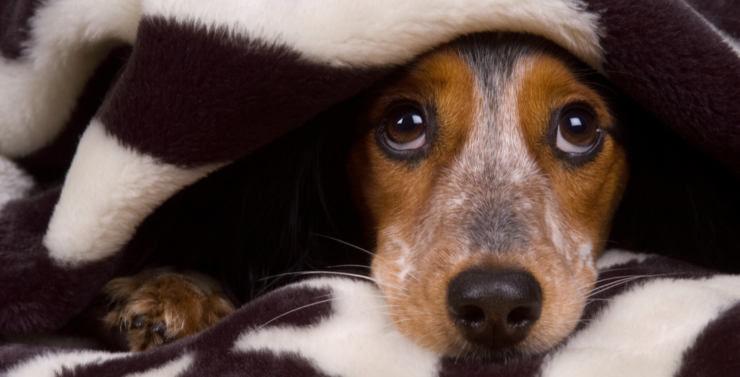 Toronto Humane Society requesting blanket donations to keep dogs warm