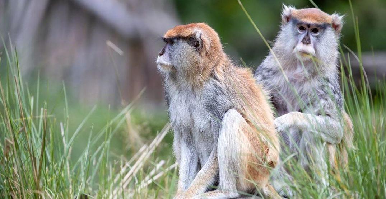 The Woodland Park Zoo is temporarily closing as a coronavirus precaution