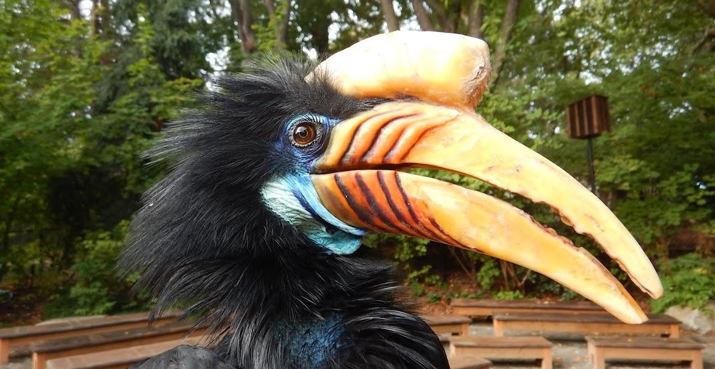 Woodland Park Zoo's female knobbed hornbill dies at 22