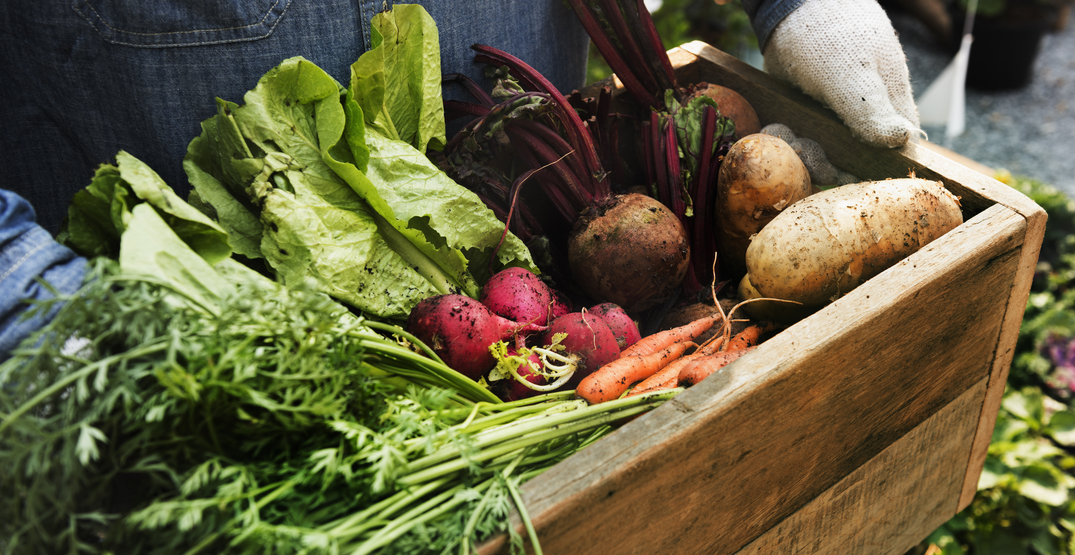 Here's how to support local farmers in Seattle