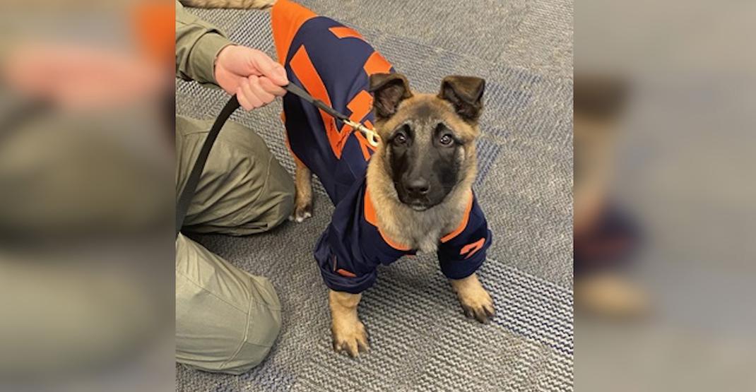 New Edmonton Police pup named after Oilers legend