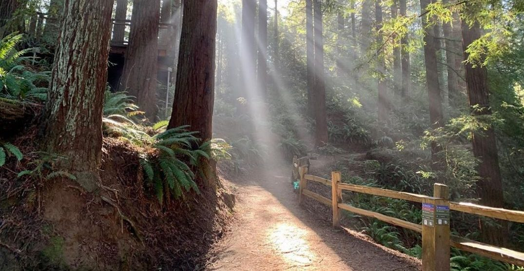 5 crowd-less hiking trails to walk near Portland