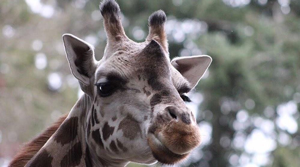 Woodland Park Zoo postpones Earth Day event as coronavirus precaution