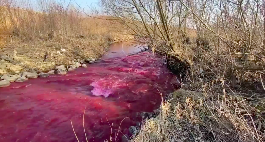 400 litres of red ink spilled in an Etobicoke Creek