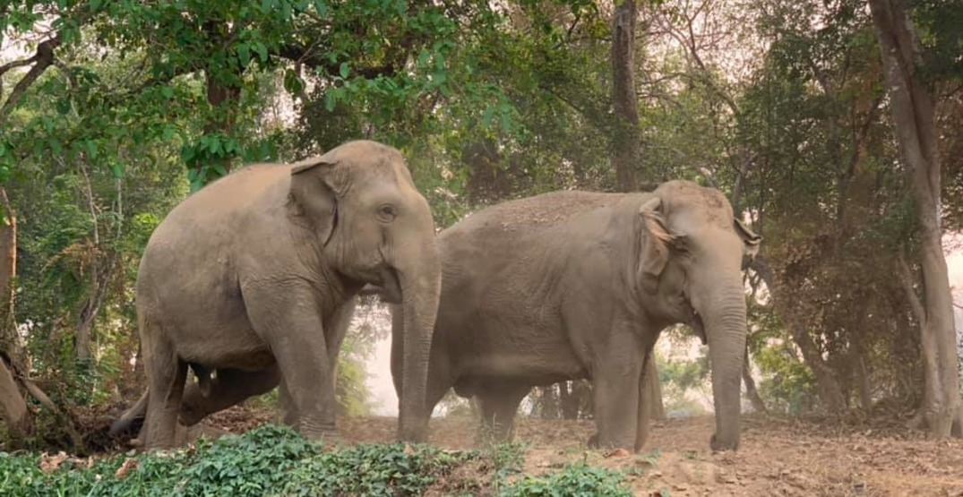 Watch a livestream of amazing rescue elephants in their element (VIDEOS)