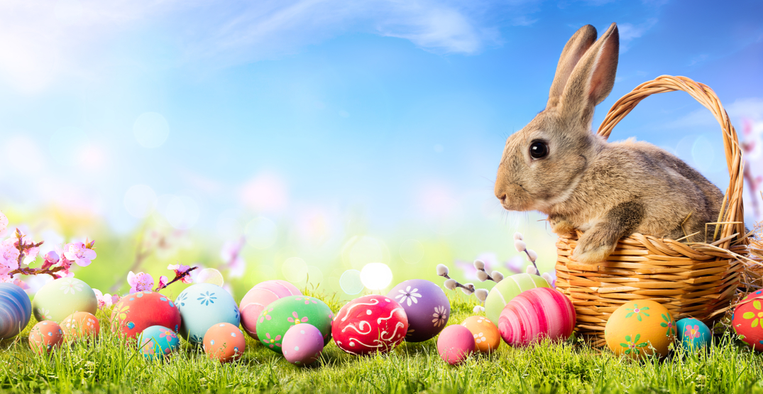 """BC premier declares Easter Bunny an """"essential service"""""""
