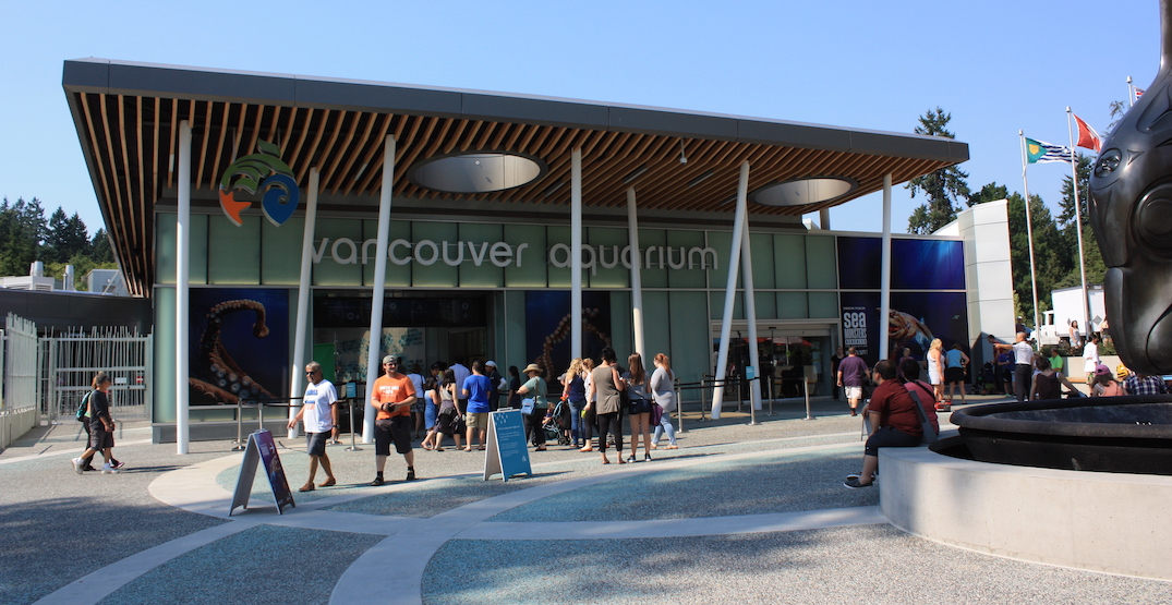 Vancouver Aquarium at risk of bankruptcy and permanent closure