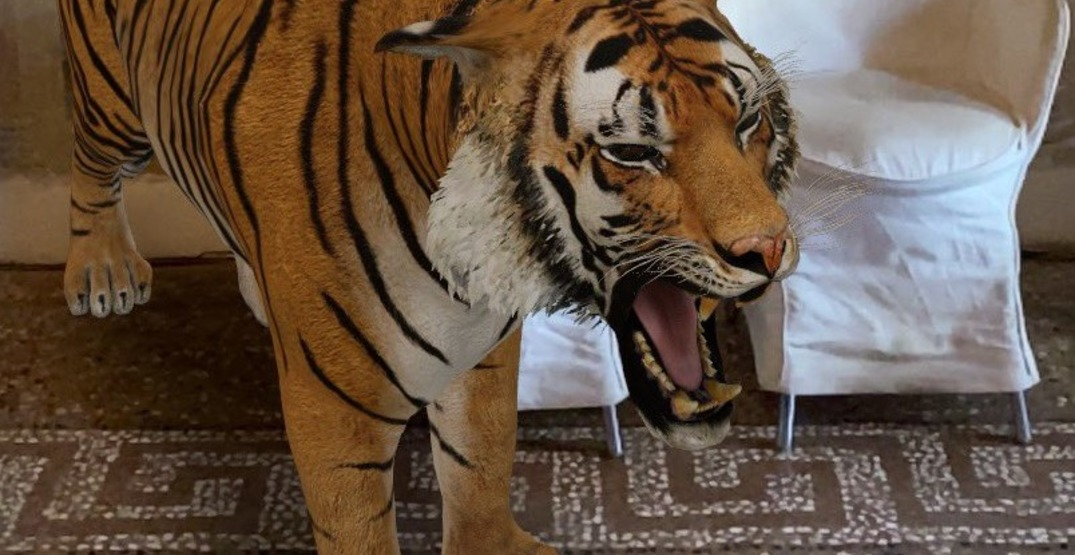 Be your own Tiger King with Google Augmented Reality (VIDEO)
