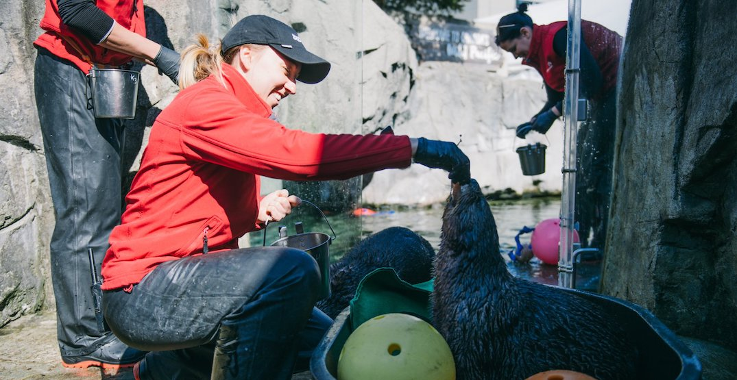 Opinion: Our Vancouver Aquarium needs to be saved from ...