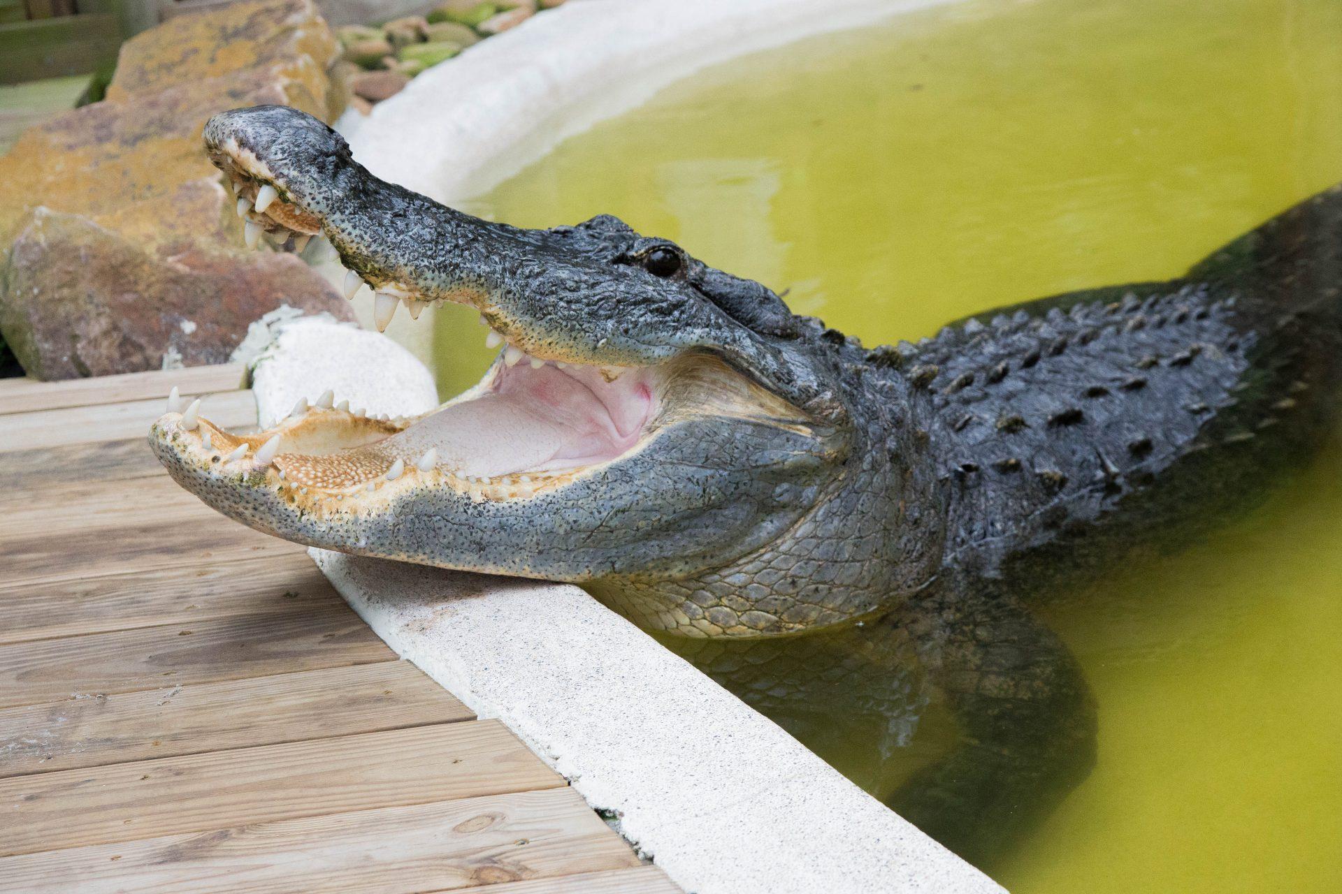 Wild Florida animal
