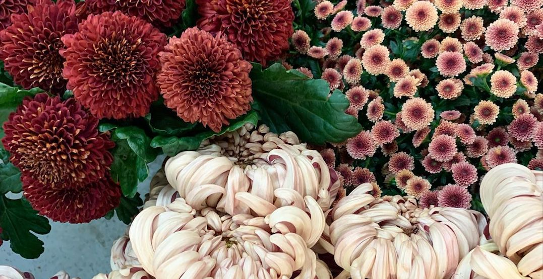 The gorgeous annual Toronto Flower Market is going digital