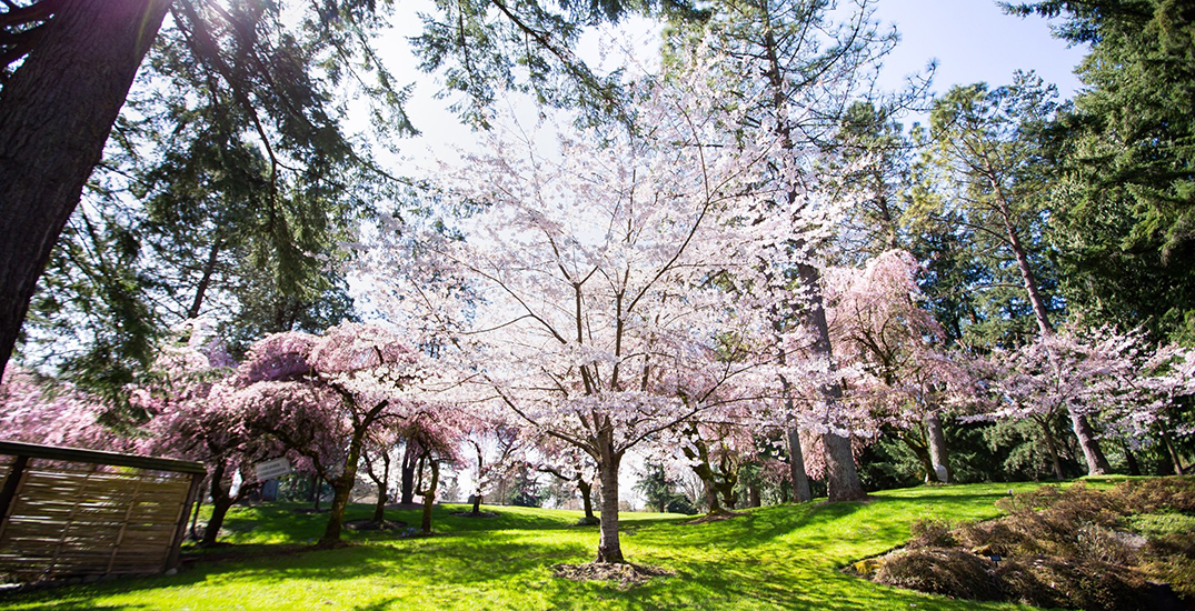 VanDusen Botanical Garden and two city golf courses to reopen May 1