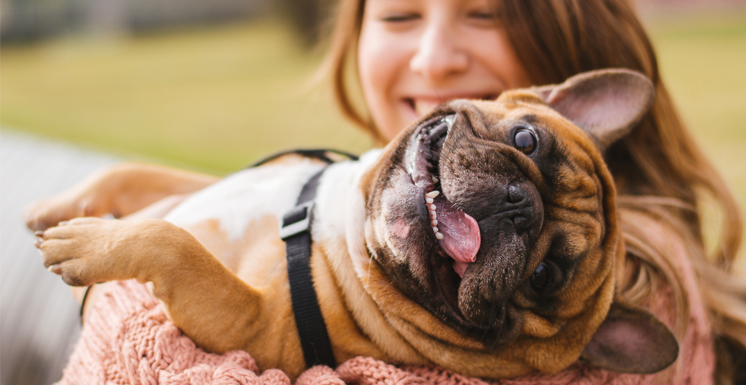 CDC updates coronavirus guidelines to include pets and animals