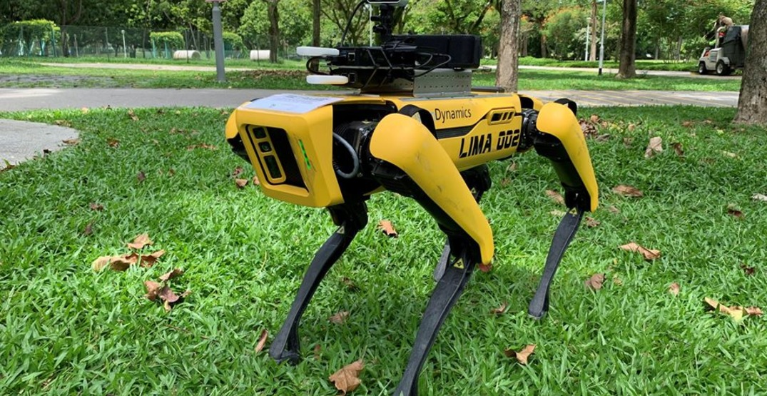 A robodog in Singapore is patrolling a park to enforce physical distancing (PHOTOS)
