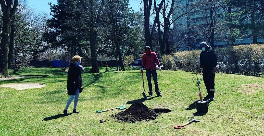 An urban orchard is popping up in this Toronto park