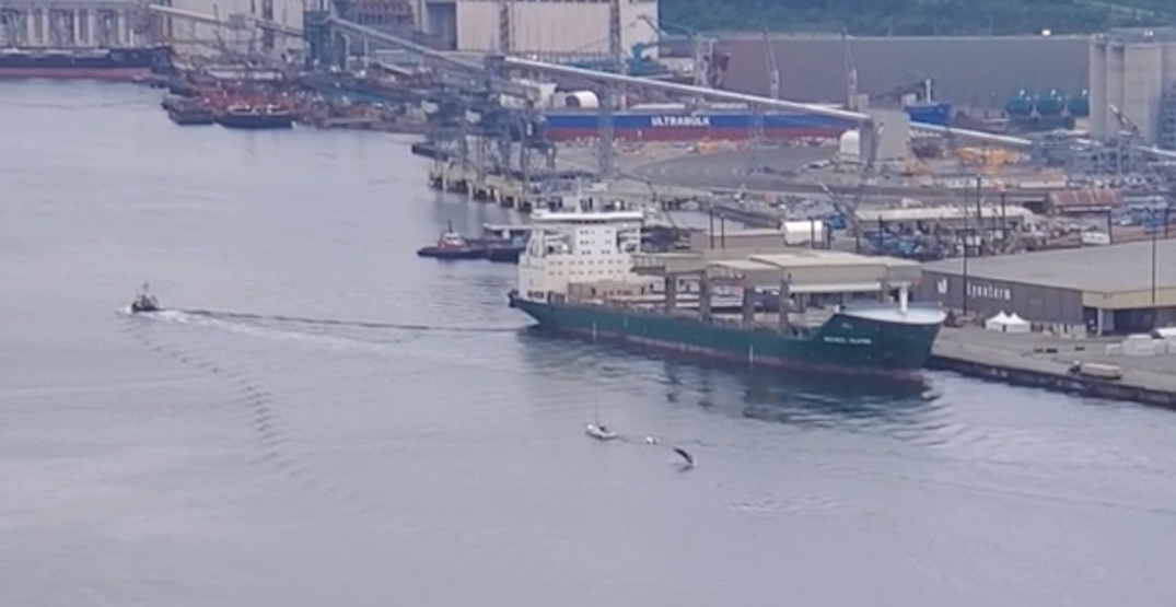 Humpback whale spotted breaching in Vancouver harbour near PNE (VIDEO)