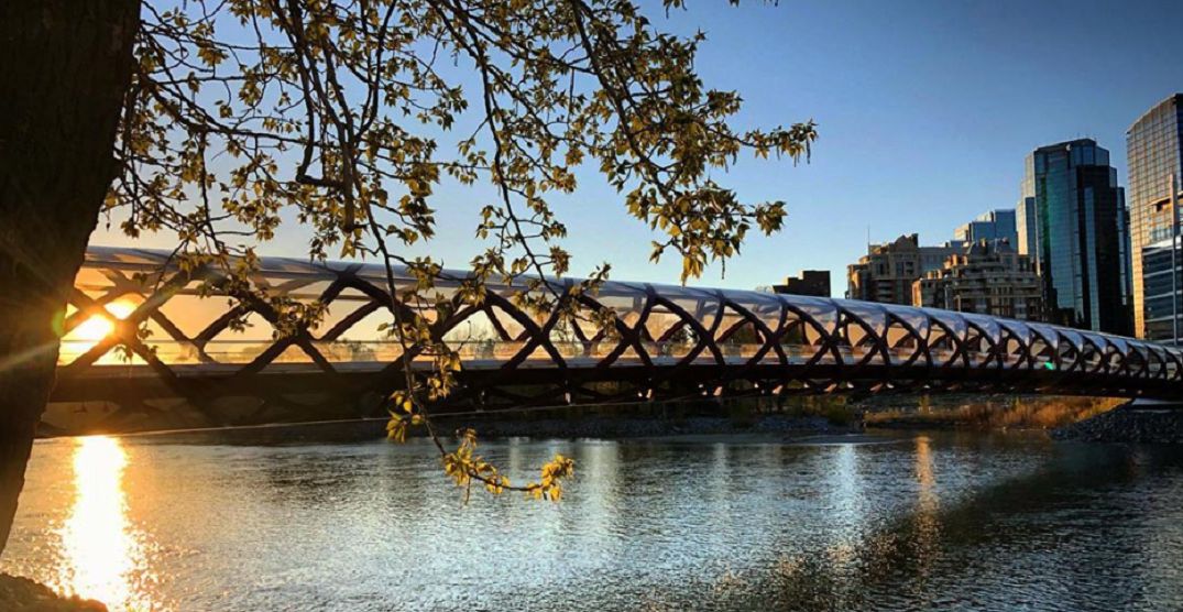 Calgary has started getting greener as spring continues (PHOTOS)