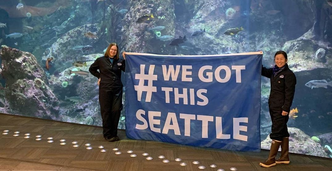 Seattle Aquarium anticipates its slowest summer season yet