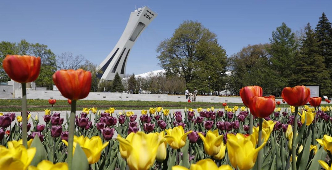 20 shots of the Botanical Garden's magical field of tulips (PHOTOS)